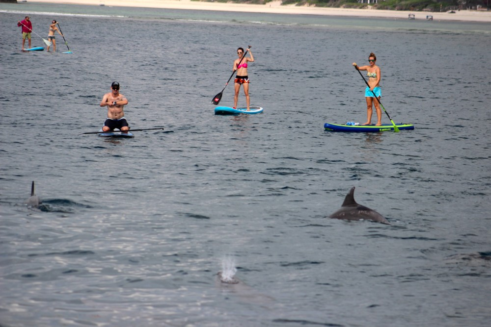 Are you curious, adventurous and courageous? Test your balance on a stand up paddle board as you meet a pod of playful dolphins.