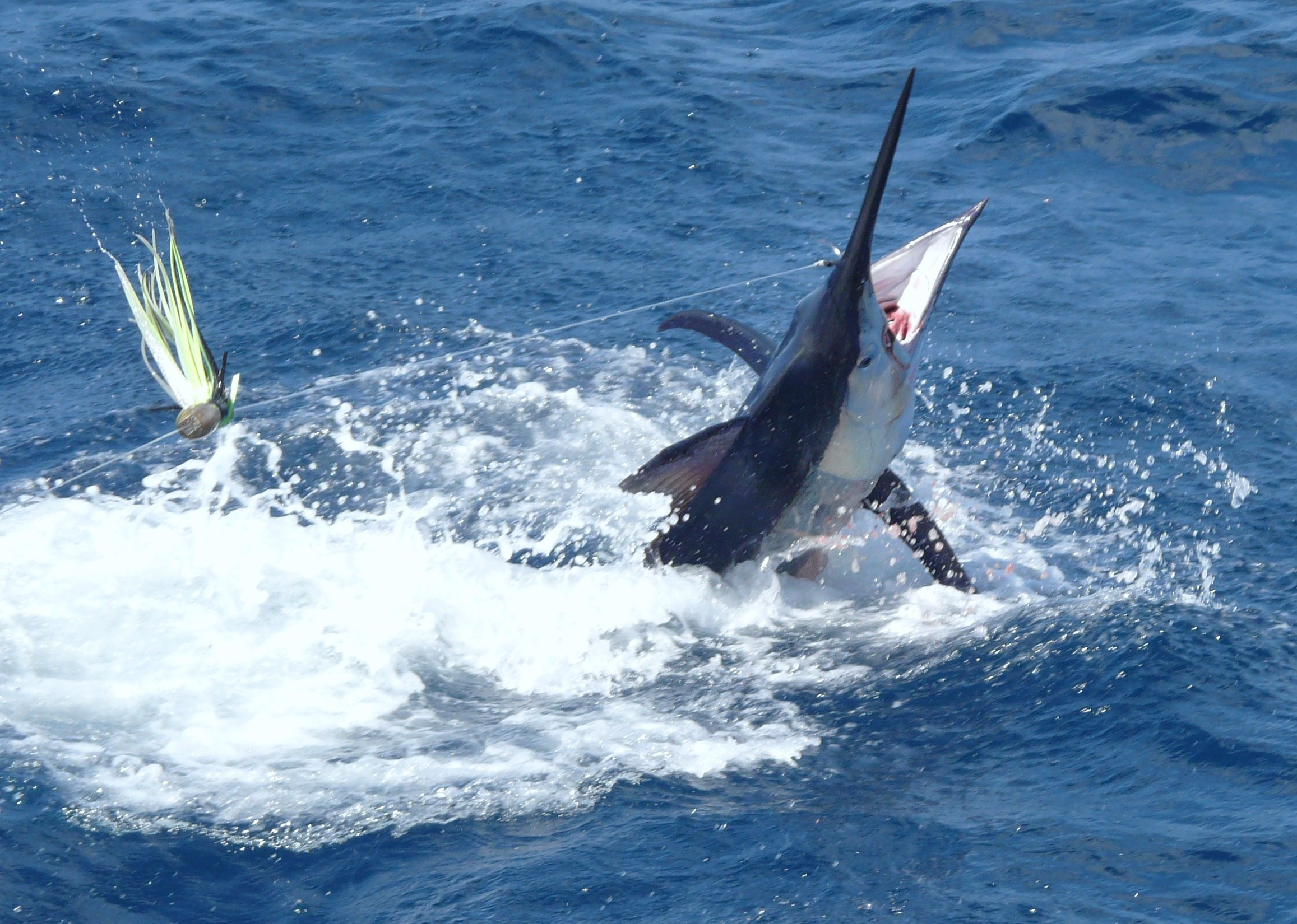 Go Big Game Fishing and catch your first Marlin