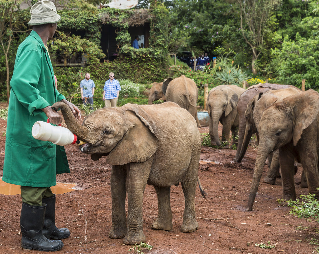 David Sheldrick Wildlife Trust | Hemingways Nairobi